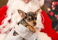 Perrito durante la Navidad Imágenes de archivo libres de regalías