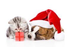 Perrito el dormir en el sombrero rojo de santa y el gatito escocés con la caja de regalo aislado en whie Imágenes de archivo libres de regalías