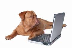Perrito elegante con la computadora portátil Imagenes de archivo