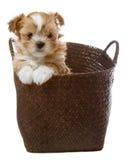 Perrito en cesta Foto de archivo