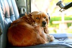 perrito en el asiento de programa piloto Imagen de archivo libre de regalías