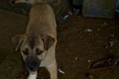 Perrito en el campo, perro Foto de archivo libre de regalías