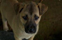 Perrito en el campo, perro Imágenes de archivo libres de regalías