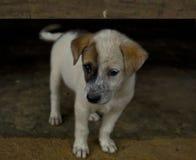 Perrito en el campo, perro Imagenes de archivo