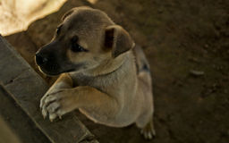 Perrito en el campo, perro Fotos de archivo libres de regalías