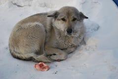 Perrito en el invierno Imagen de archivo