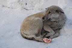 Perrito en el invierno Imagen de archivo libre de regalías