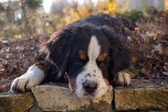 Perrito en el jardín Imagen de archivo libre de regalías