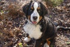 Perrito en el jardín Fotos de archivo libres de regalías