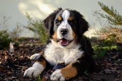 Perrito en el jardín Foto de archivo libre de regalías