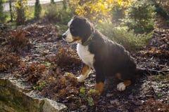 Perrito en el jardín Fotos de archivo