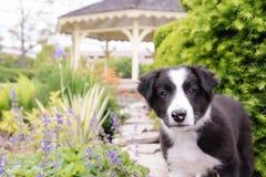 Perrito en el jardín Imagenes de archivo