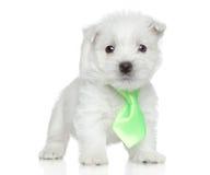 Perrito en el lazo que presenta en un fondo blanco Foto de archivo