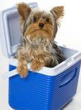 Perrito en el refrigerador Fotografía de archivo