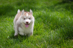 Perrito en hierba Foto de archivo libre de regalías