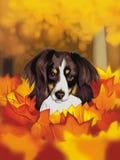 Perrito en hojas Imagen de archivo libre de regalías