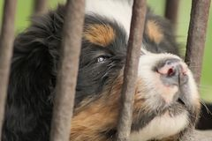 Perrito en jaula Foto de archivo libre de regalías