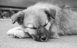 Perrito en la calle Fotos de archivo libres de regalías