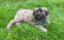 Perrito en la hierba fresca Fotos de archivo