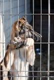 Perrito en la libra de perro Fotografía de archivo