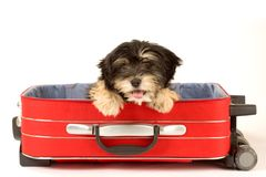 Perrito en la maleta imagen de archivo