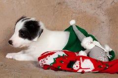 Perrito en la media de la Navidad imagenes de archivo