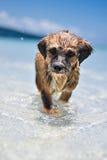 Perrito en la playa Foto de archivo