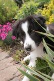 Perrito en la yarda Foto de archivo