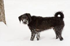 Perrito en nieve Imágenes de archivo libres de regalías
