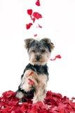 Perrito en pétalos color de rosa Imágenes de archivo libres de regalías