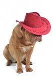 Perrito en sombrero de vaquero Imagen de archivo