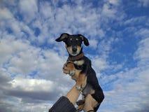 Perrito en un cielo del fondo Fotos de archivo libres de regalías