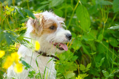 Perrito en un prado del verano Foto de archivo libre de regalías