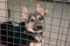 Perrito en un refugio para los perros sin hogar Imágenes de archivo libres de regalías