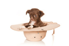 Perrito en un sombrero Foto de archivo libre de regalías