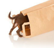 Perrito en una bolsa de papel Foto de archivo