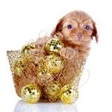 Perrito en una cesta wattled con las bolas del Año Nuevo. Imagen de archivo libre de regalías