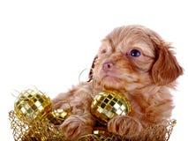 Perrito en una cesta wattled con las bolas del Año Nuevo. Imágenes de archivo libres de regalías