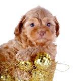 Perrito en una cesta wattled con las bolas del Año Nuevo. Imagen de archivo