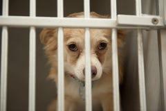 Perrito en una jaula Foto de archivo libre de regalías