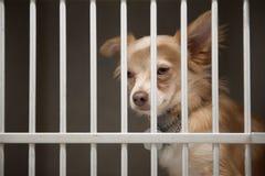 Perrito en una jaula Fotos de archivo libres de regalías