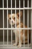 Perrito en una jaula Imagenes de archivo