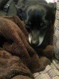 Perrito en una manta Foto de archivo libre de regalías