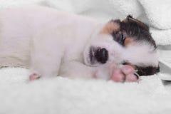 Perrito en una manta blanca Fotos de archivo