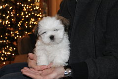 Perrito en una palma Imagen de archivo libre de regalías