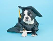 Perrito enojado de la graduación fotografía de archivo