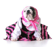 Perrito femenino Imágenes de archivo libres de regalías