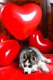 Perrito fornido del día del ` s de la tarjeta del día de San Valentín en un fondo de la textura Imagen de archivo libre de regalías