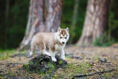 Perrito fornido en un bosque foto de archivo