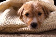 Perrito hermoso que miente en un suéter hecho punto acogedor Imagen de archivo libre de regalías